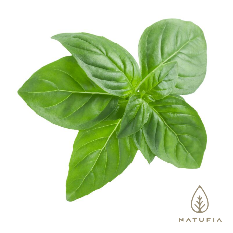 Natufia basil leaves