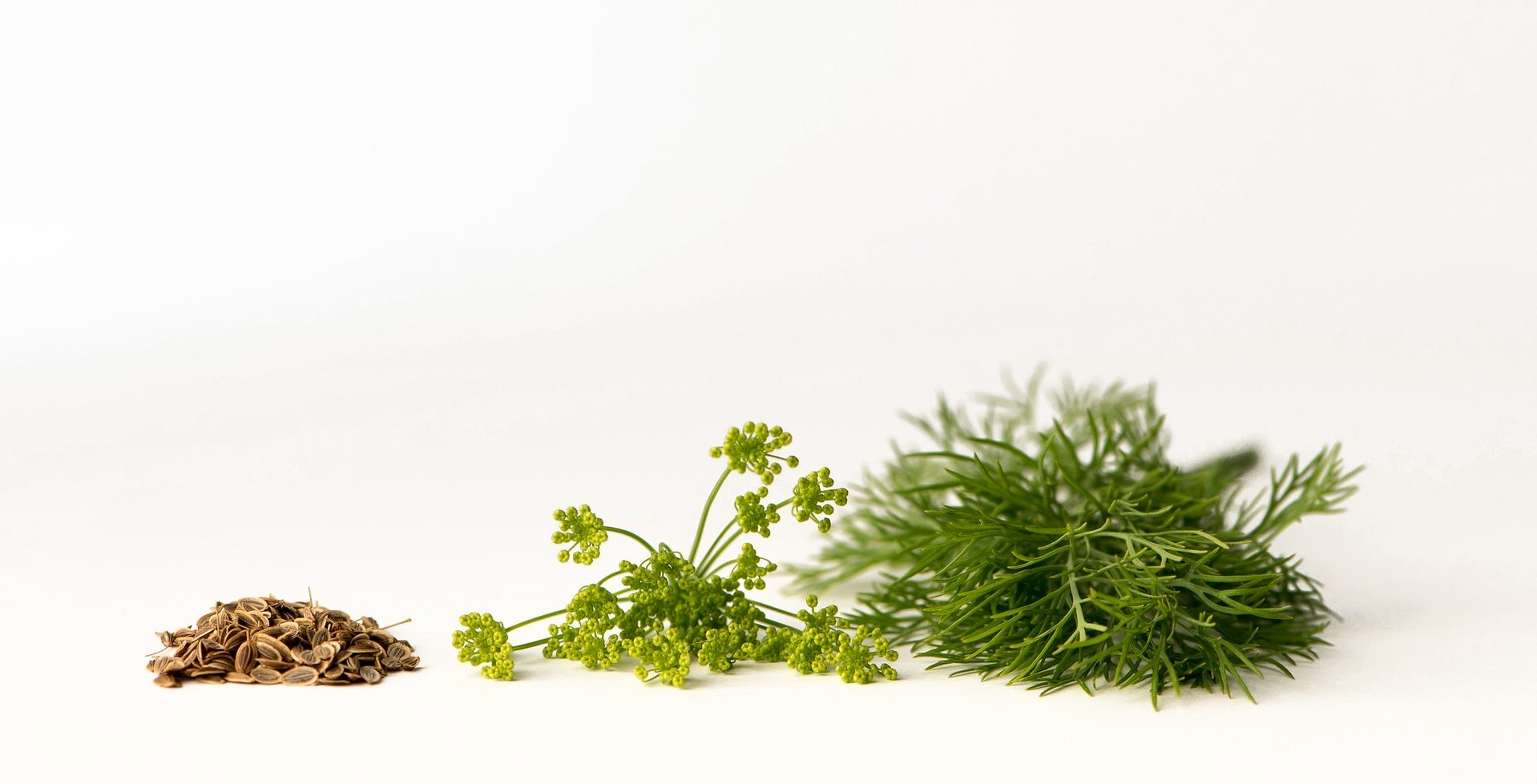 dill in various forms - seeds, blossom, herb